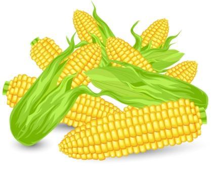 Кукуруза 2018 года