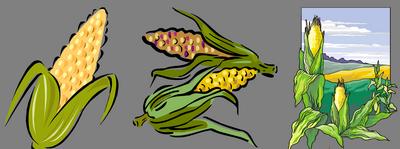 Календарь кукурузы 2018 года