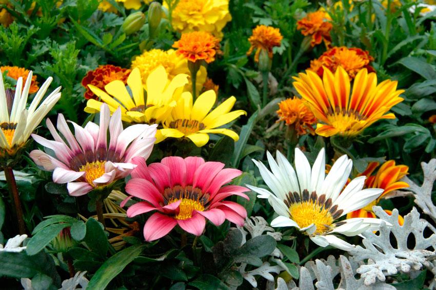 показать фото цветов газания пометах албанских питбулей