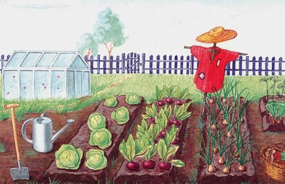 чем подкормить рассаду капусты