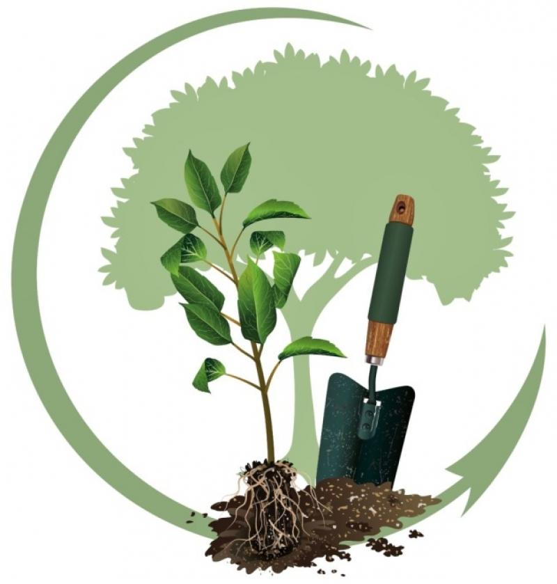 Посадка деревьев 2020, когда сажать плодовые, фруктовые, садовые деревья, уход за деревьями, когда