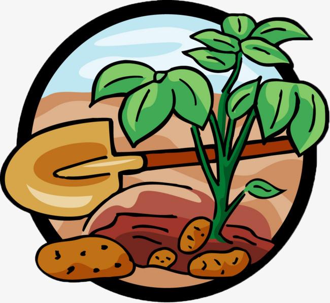 как сажать красный лук семенами